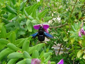 bi bee vandra vandring hike hiking walk walking crete kreta
