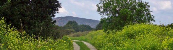 väg blommor berg road flowers mountain vandra vandring hike hiking walk walking crete kreta